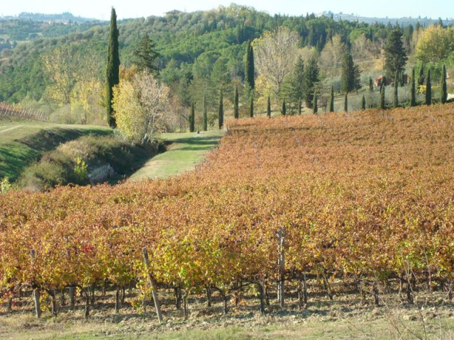 Tuscan Fall in the vineyards