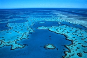 Donation for WWF to help Save the Earth and the Great Reef Barrier
